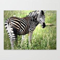 Zebra Posing Canvas Print