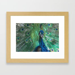 Let Me See Your Peacock Framed Art Print