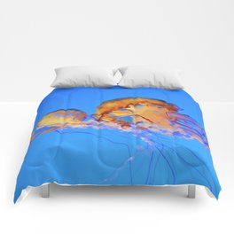 Chrysaora Comforters