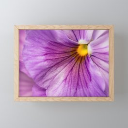 Purple Pansy Flower Close-up #decor #society6 #buyart Framed Mini Art Print