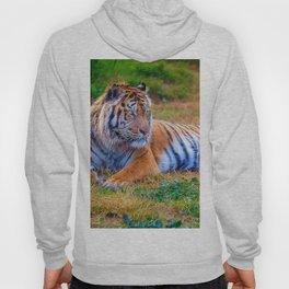 Extraordinary Animals - Tiger 1 Hoody