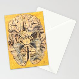 Brain section showing visual system pathway Stationery Cards
