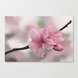 Painting of Japanese Cherry Flowers Canvas Print