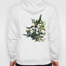 Jade - money plant - succulent in bright light Hoody