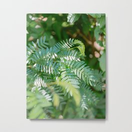 More shades of green | Monteverde Costa Rica botanical nature photography Metal Print