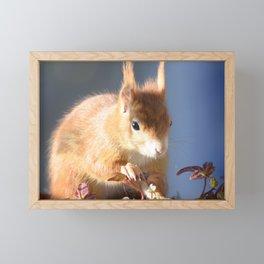 Autumn Squirrel Framed Mini Art Print