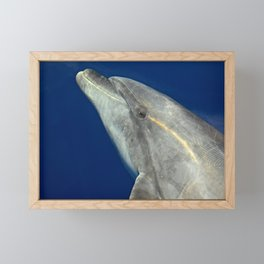 Making friends with a bottlenose dolphin Framed Mini Art Print