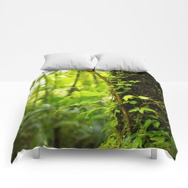 Trunk of the Jungle Comforters