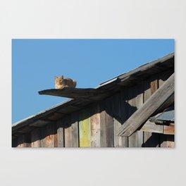 Walk the plank ye kitty Canvas Print