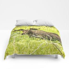 Bull Moose in Kincaid Park, No. 2 Comforters