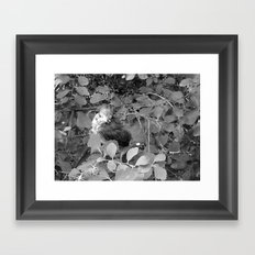 Regal Runt (B&W) Framed Art Print
