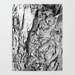 Tree Bark Black and White Poster