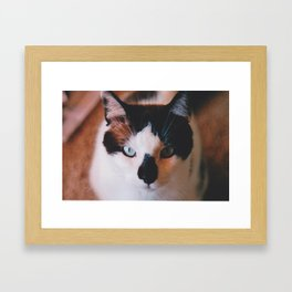 Furry Beast Framed Art Print
