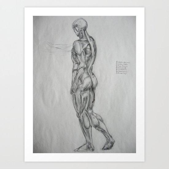 Muscle Anatomy II Art Print