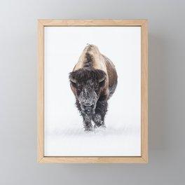 Yellowstone National Park: Lone Bull Bison Framed Mini Art Print