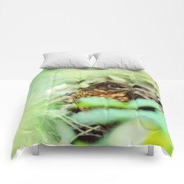 Fledgling Comforters