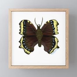 Morning Cloak Butterfly Framed Mini Art Print