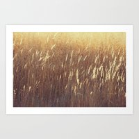 Amber waves No. 1 Art Print