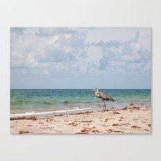 Heron Sand and Surf Canvas Print