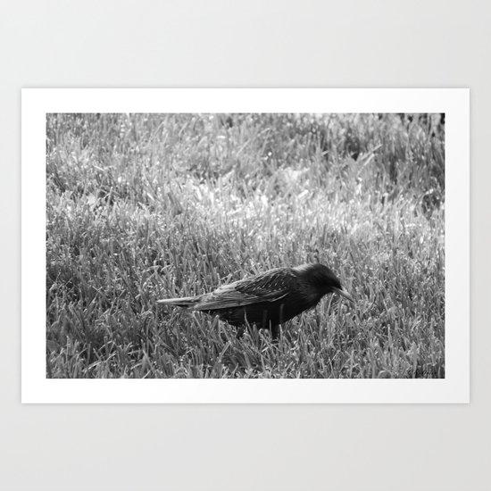 Early bird gets the worm Art Print