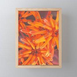 aloe firecracker Framed Mini Art Print