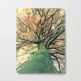 The big strong tree Metal Print