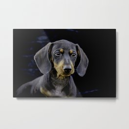 Black and Tan Dachshund Puppy Looking off into the Distance on a Black Background Metal Print