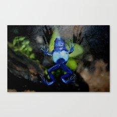 Poison Dart Frog Belly- Dendrobates Azureus Canvas Print