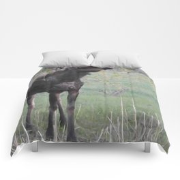 Missy willows evening Comforters
