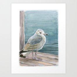 Study of a Juvenile Ring-billed Gull Art Print