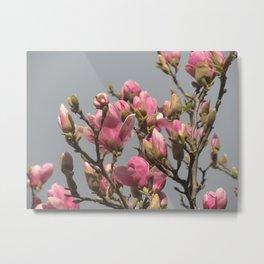 Magnolia e cielo plumbeo 2 Metal Print