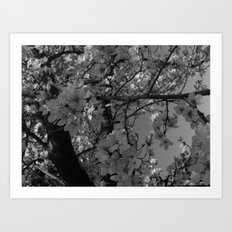 Places in Black & White: Plum Tree 9 Art Print