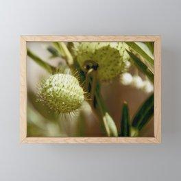 Fatty Prickle Framed Mini Art Print