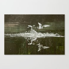 Little tern Canvas Print