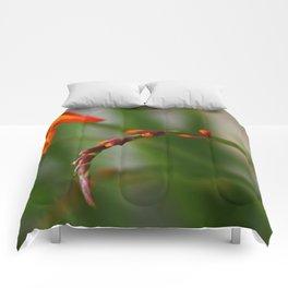 Crocosmia Comforters