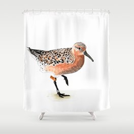 Red Knot B95 Shower Curtain