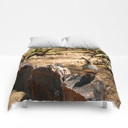 A Male Gambel's Quail Comforters