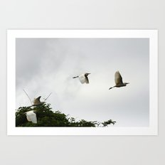 Flight of the egrets Art Print