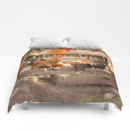 Rhode Island Red chickens eating Comforters
