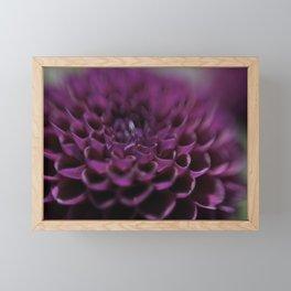 Purple Dalia Flower - Dignity and Grace Framed Mini Art Print