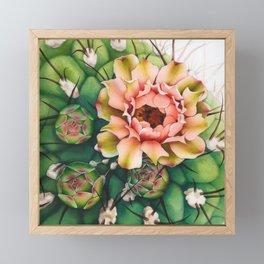 A series of Cactus Flower - 2 Framed Mini Art Print