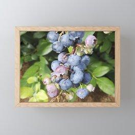 Ready to pick blueberries? Framed Mini Art Print