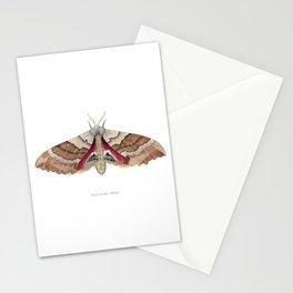 Big Poplar Sphix Stationery Cards