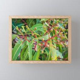 Flowering Gum 0. The Bud Cluster. Australia. Framed Mini Art Print