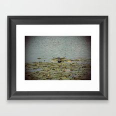 Flying Bird Hovering over Water Color Nature Photography Framed Art Print