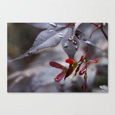 Japanese Maple Seeds II Canvas Print