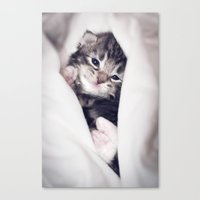blankets Canvas Prints featuring Baby kitten in blankets by JosignArt