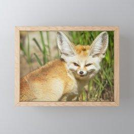 Fennec Fox Framed Mini Art Print