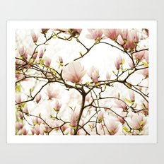 Queen For A Day Pink Magnolia Flower Art Print