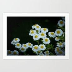 Little white flowers Art Print
